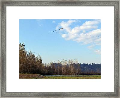 Framed Print featuring the photograph A Gaggle Of Cacklers by I'ina Van Lawick