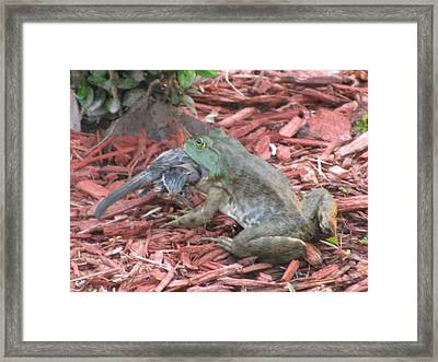 Framed Print featuring the photograph A Gals Gotta Eat _ Frog by Margaret Newcomb
