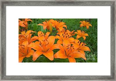 A Garden Full Of Lilies Framed Print