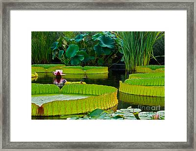 A Garden In Gentle Waters Framed Print