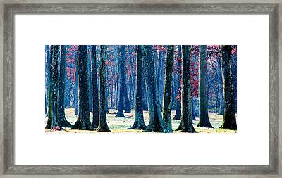 A Gathering Of Trees Framed Print by Angela Davies
