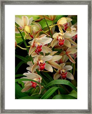 Framed Print featuring the photograph A Gathering by Rodney Lee Williams