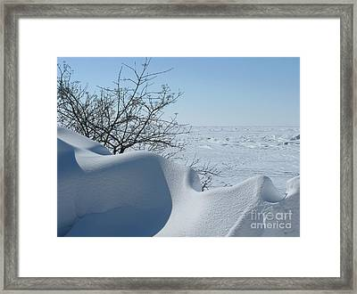 Framed Print featuring the photograph A Gentle Beauty by Ann Horn