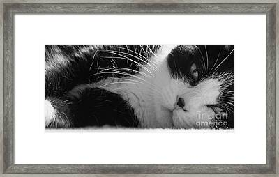 A Gentle Cat - Monochrome Framed Print by David Warrington