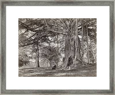 A Gentleman Sitting Beneath A Large Native Tree In British Ceylon Framed Print by Scowen and Co