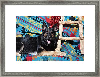 A German Shepherd Lying Framed Print by Zandria Muench Beraldo