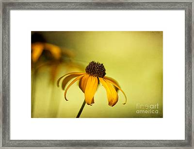 A Gift From August Framed Print by Lois Bryan