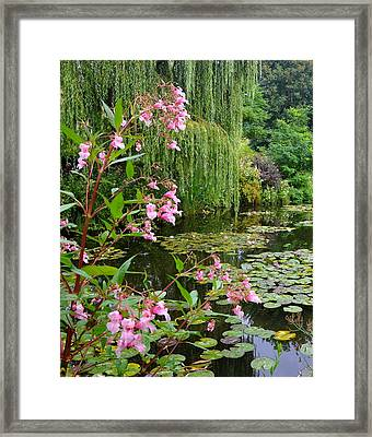 A Glimpse Of Monet's Pond At Giverny Framed Print by Carla Parris
