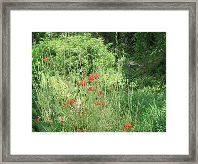 A Glimpse Of Poppies Framed Print by Pema Hou