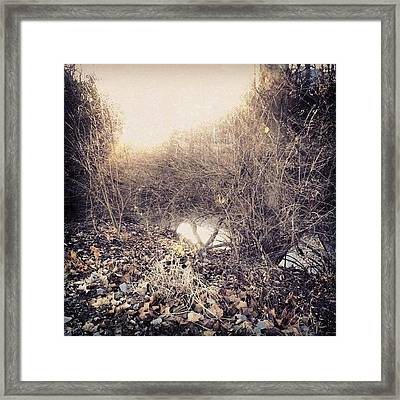 A Glimpse Of The Creek Through The Framed Print