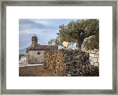 A Goat On The Woodpile Framed Print by Peter Eastland