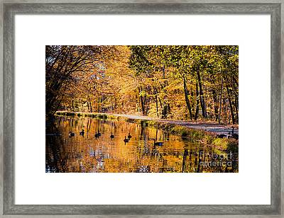 A Golden Afternoon Framed Print