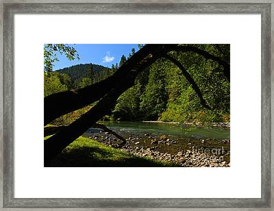 A Golden Day  Framed Print by Tim Rice