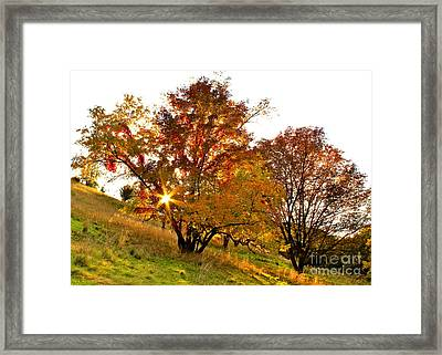 Framed Print featuring the photograph A Golden Glowing Autumn Sunset by Jay Nodianos