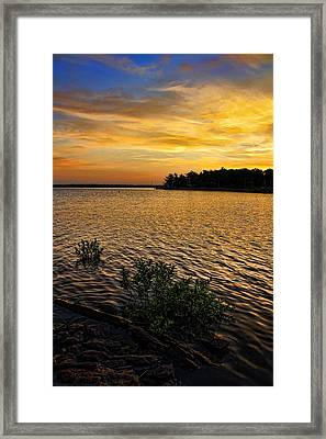 A Golden Morning From 2011 Framed Print by Carolyn Fletcher
