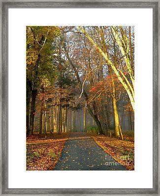 A Golden Path Framed Print by Christy Ricafrente