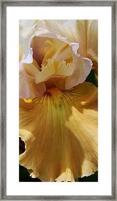 A Golden Surprise Framed Print by Bruce Bley