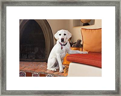 A Goldendoodle Puppy Sitting In Front Framed Print by Zandria Muench Beraldo