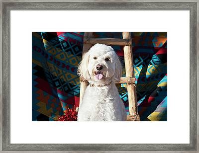 A Goldendoodle Sitting Framed Print