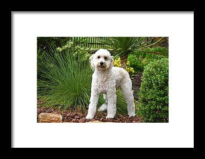 Crossbreed Framed Prints