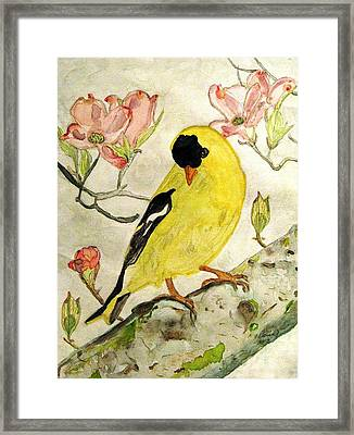 A Goldfinch Spring Framed Print by Angela Davies