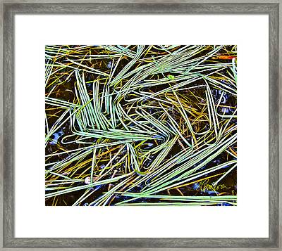 Framed Print featuring the photograph A Good Hair Day by Tom Cameron