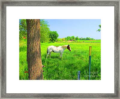 A Good Place To Roam Around Framed Print