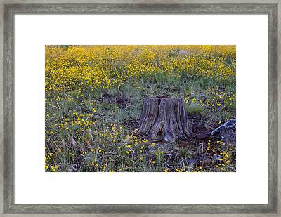 Framed Print featuring the photograph A Good Thinking Spot by Ruth Jolly