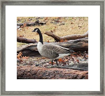 A Goose In Virginia Framed Print