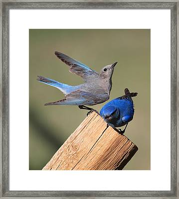 A Great Pair Framed Print by Shane Bechler