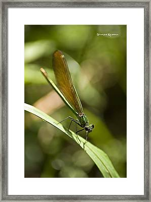 Framed Print featuring the photograph A Green Dragonfly by Stwayne Keubrick