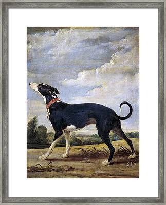 A Greyhound Lurking Framed Print by Paul de Vos