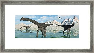A Group Of Diplodocus Dinosaurs Grazing Framed Print