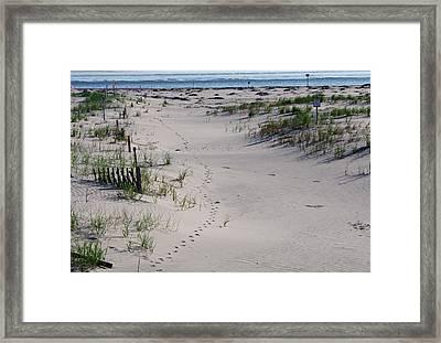 A Gull's Walk To The Ocean Framed Print