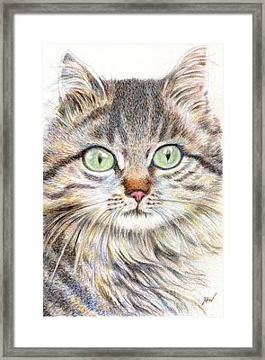 A Handsome Cat  Framed Print
