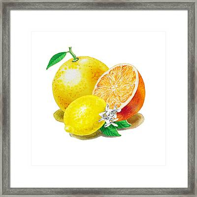 A Happy Citrus Bunch Grapefruit Lemon Orange Framed Print by Irina Sztukowski