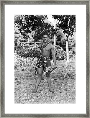A Hawaiian With Coconuts Framed Print by Underwood Archives