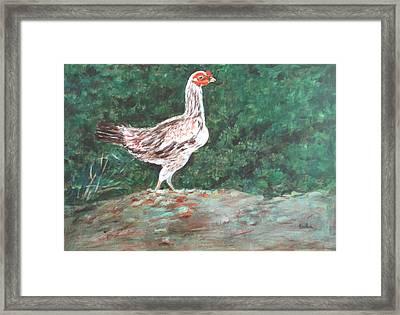 A Hen Framed Print by Usha Shantharam