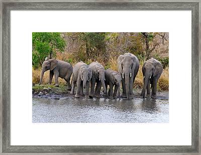A Herd Framed Print