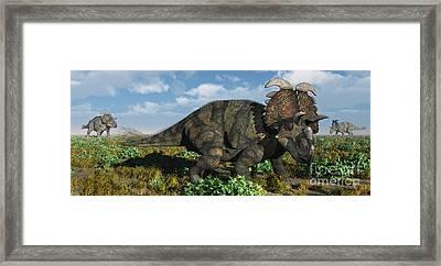 A Herd Of Albertaceratops Framed Print by Mark Stevenson
