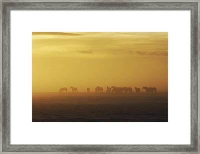 A Herd Of Horses In The Morning Fog Framed Print by Roberta Murray