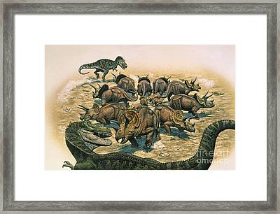 A Herd Of Triceratops Defend Framed Print by Mark Hallett