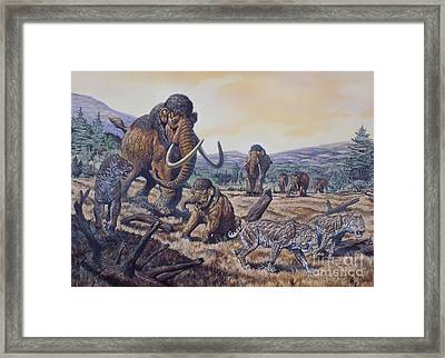 A Herd Of Woolly Mammoth And Scimitar Framed Print