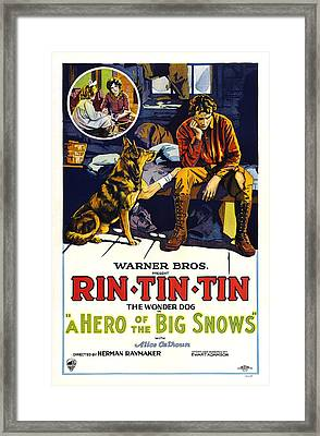 A Hero Of The Big Snows, Left Rin Tin Framed Print by Everett