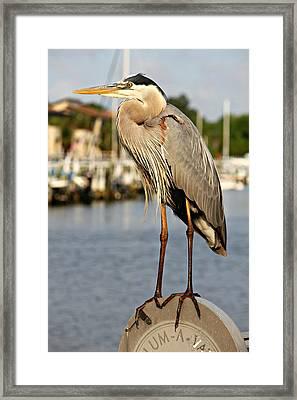 A Heron In The Marina Framed Print