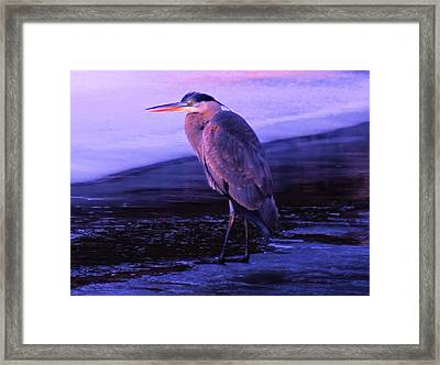 A Heron On The Moyie River Framed Print by Jeff Swan