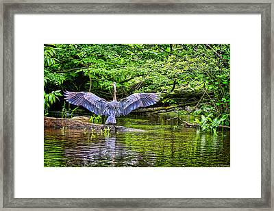 Framed Print featuring the photograph A Heron Touches Down by Eleanor Abramson