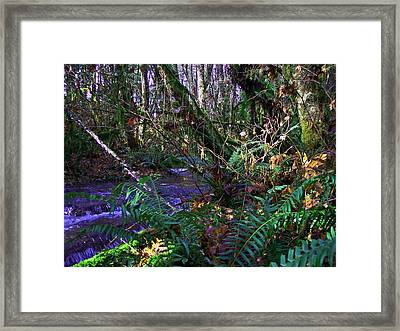 A Hidden Creek Framed Print