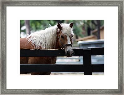 A Hilton Head Island Horse Framed Print
