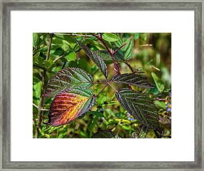 A Hint Of Autumn Framed Print